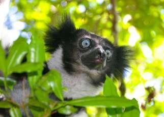 Madagaskar - w krainie lemurów Madagaskar, Wyc. objazdowe