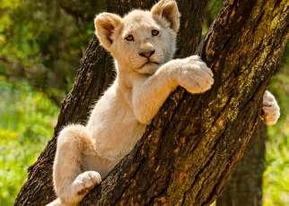 Safari z Wielką Piątką Republika Południowej Afryki, Wyc. objazdowe