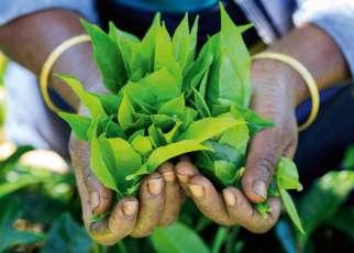 Smak i zapach Cejlonu Malediwy, Wyc. objazdowe