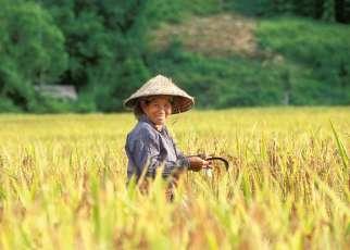Ryż na Polu, Raj na Plaży Wietnam, Wyc. objazdowe