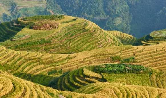 Wietnam i Chiny - przyczajony tygrys, ukryty smok #14