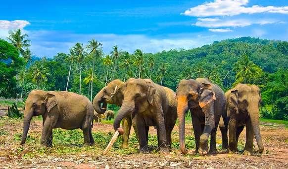 Cejlon w pigułce i bajeczne Malediwy Sri Lanka, Wyc. objazdowe