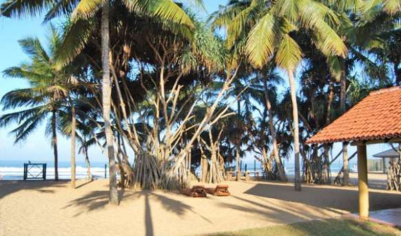 Hibiscus Beach - pokój