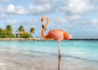 Flaming Curacao Karaiby