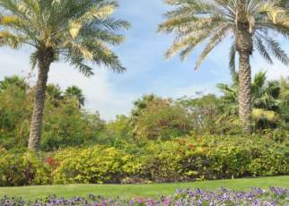Dubaj jest Naj - zobacz i odpoczywaj Emiraty Arabskie, Wyc. objazdowe