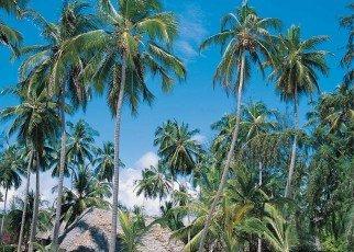 Mapenzi Beach Club