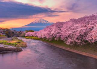 Śladami Samurajów i Kwitnących Wiśni