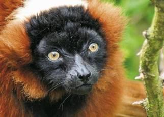 Natura Lemura Madagaskar, Wyc. Objazdowe, Wyc. objazdowe