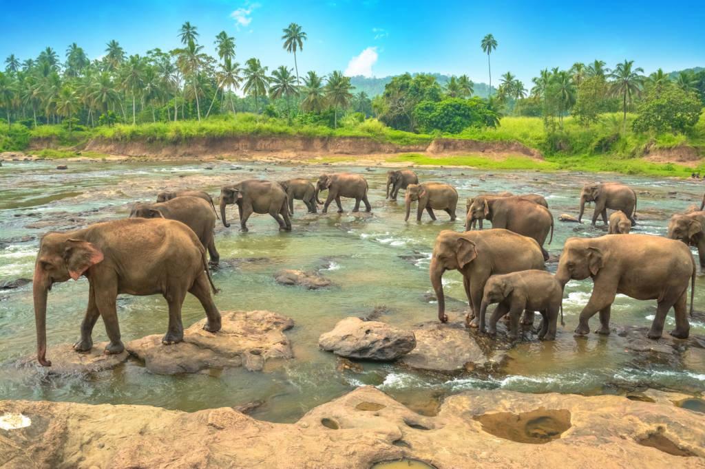 Wczasy i wakacje na Sri Lance